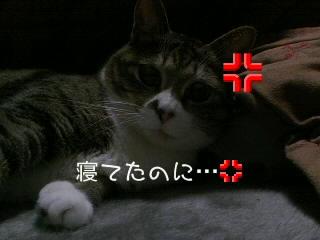 起こしちゃった(σω‐)